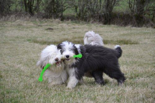 Hunter 61101 Hundespielzeug von Kong, Safestix, S, 30 cm