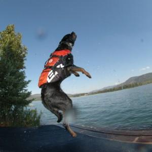 EzyDog Seadog Hunde-Schwimmweste, Größe L, rot