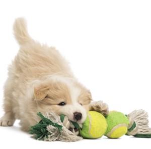 Hundspielzeug