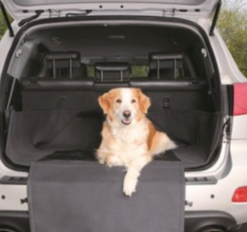 Travel & Transport for dogs