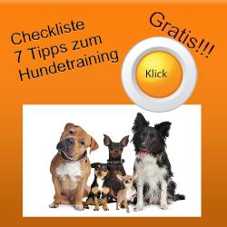 Hol dir deine Checkliste: Hundetraining